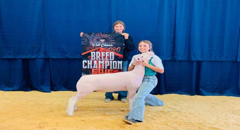 Cori Wilson, WMS 7th grader Breed Champion Dorset Ewe 2020 EYO Fall Classic